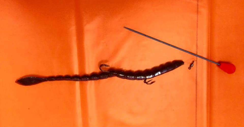 How to Thread Soft Plastic Bait and Create Your Own Lure